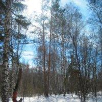 лес :: ОКСАНА ШВЕЦ