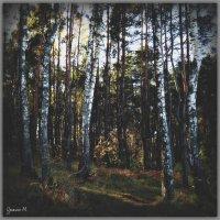 В лесу. :: Михаил Цегалко