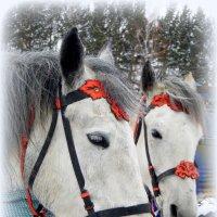Белые кони ждут своих принцев. :: nadyasilyuk Вознюк