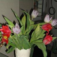 Тюльпаны :: Svetlana Lyaxovich