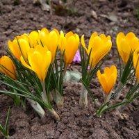 Вот и весна. :: Игорь Карпенко