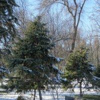 Парк в феврале... :: Тамара (st.tamara)