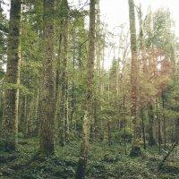 В чаще леса :: Юлия Мешкова