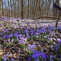 Сказочный лес... :: Galina Dzubina