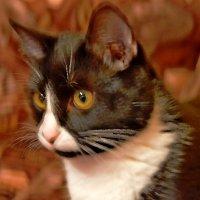 Мой котейка :: Vladimir Semenchukov