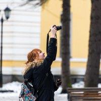 Фотоохота на белок. :: Владимир Безбородов