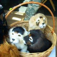 Собачки на любой вкус :: татьяна