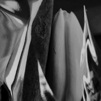 Тюльпан :: Tanja Gerster