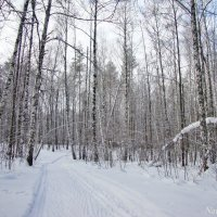 Снежный лес :: Лидия (naum.lidiya)