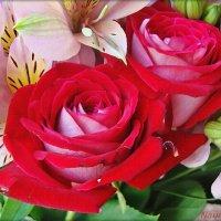 Розы акварельные :: Лидия (naum.lidiya)