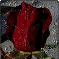 Бутон розы :: Нина Корешкова