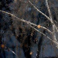 И дожди,и зима - все смешалось пока... Так  непонятна  эта  весна. :: Валерия  Полещикова