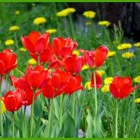 Цветы весны :: Светлана Петошина