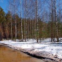 Неудержимо таянье снегов... :: Лесо-Вед (Баранов)