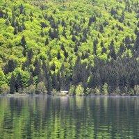 Зеленый берег :: Николай Танаев