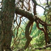 В горах Адыгеи :: татьяна