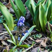 первые цветы :: sergio tachini