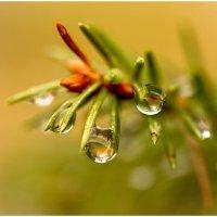 Капли дождя :: Алексей Румянцев