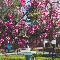 Приход весны :: Yana Fizazi