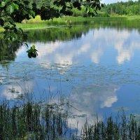 Озеро летнее :: Наталья
