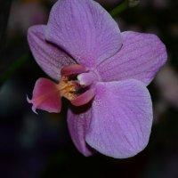 Цветок :: Надя Sh