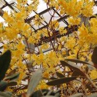 Чудеса ботанического сада :: ii_ik Иванов