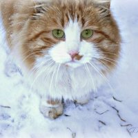 У вас нет кота... тогда я иду к вам! :: Galina ✋ ✋✋