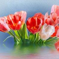 Тюльпаны под дождём :: Светлана Л.