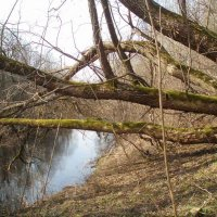 Pavasaris prie Lėvens :: silvestras gaiziunas