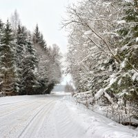 Зимняя дорога. :: Борис Руненко