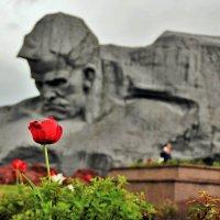 Майское.... :: Сергей Дабаев