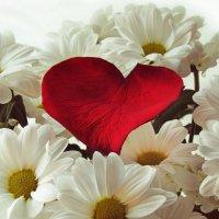 сердце цветов :: Алиса Колмагорова