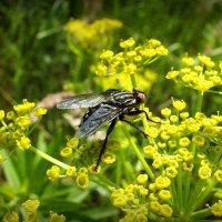 муха на цветах :: Александр Прокудин