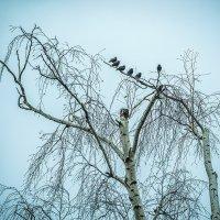 Птичье собрание :: Игорь Герман