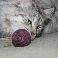 Cat :: An Soudade