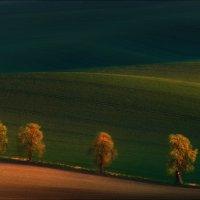Shadows on the fields.... :: Влад Соколовский