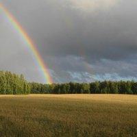 Летняя радуга :: Вера Андреева