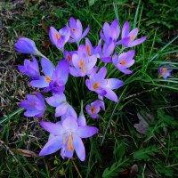 Ганновер (серия). Навстречу весне, навстречу счастью! :: Nina Yudicheva