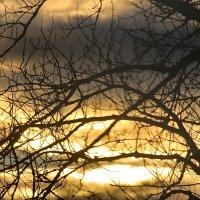 Укутаны ветви закатом..... :: Tatiana Markova