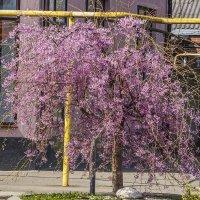 Весенний город :: Игорь Сикорский