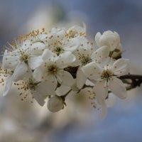 Весна пришла-6. :: Руслан Грицунь