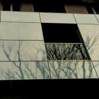 """Из серии """"Деревья в городе"""" :: Tanja Gerster"""