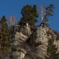 И на камнях растут деревья! :: Радмир Арсеньев