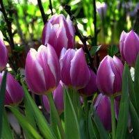 Репетиция весны :: krealla 1