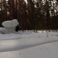 У леса на опушке :: Елена Тренкеншу