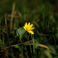 Первый весенний.... :: владимир