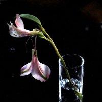 Последний фонарик альстромерии ( вариант № !) :: veilins veilins