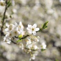 Весна пришла-15. :: Руслан Грицунь