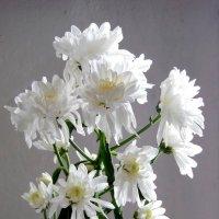 Хризантемы- белые цветы. :: nadyasilyuk Вознюк