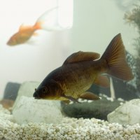 В аквариуме :: Aнна Зарубина